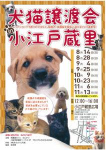 犬猫譲渡会 @ 小江戸蔵里